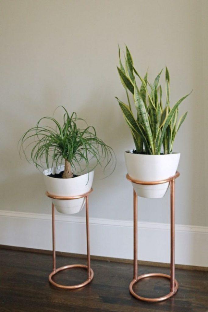 طراحی داخلی گیاهان آپارتمانی